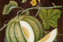 Botanicals / Drool