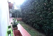 Affitto Pisa
