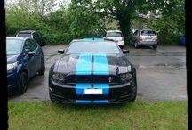 Mustangs in Real Life