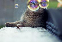 animal shots
