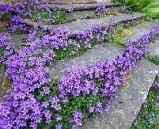Vaste planten en bodembedekkers