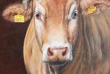Koeien-schilderijen / Verschillende koeienrassen in olieverf geschilderd door Mylene de Kleijn.