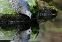 príroda a zviera