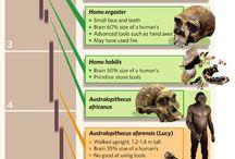 Anthropology v