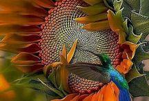 les oiseaux pêcheurs
