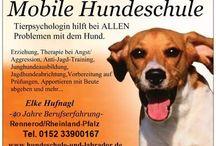 Hundeschule und Tierpsychologie / Probleme mit dem Hund? Hier bekommen Sie Hilfe!