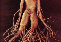 Art Ref - Mandrake