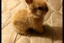 bunnies <3 / by Jennifer Roan