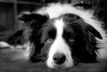dogs [CUTIES]