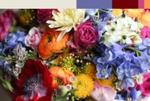 Color Inspiration / Flowers : The Rainbow of Life