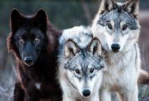 Doggos / Animals