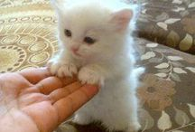 #pets#❤️❤️❤️❤️❤️❤️westie