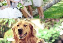 Furry Friends / Pets at weddings! Too cute!