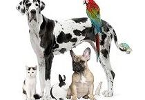 Discount Flea, Tick and Heartworm / Products offering flea, tick and/or heart worm control for dogs and cats.