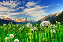 Dandelions are Dandy / by Merry Ford