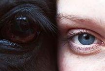 Fotografie - Paarden