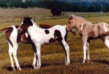 Foalin' Around