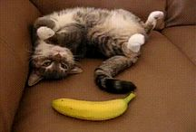 gif animale amuzante