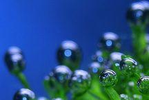 Druppels.... / Zie de wereld door een waterdruppel, dan zie je verassende dingen....
