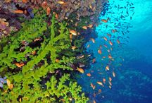 Dive / Dive the waters surrounding Qamea, known as the soft coral capital of the world