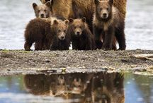 Bears / by Tracy Wigman