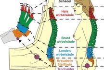 Reflexni body