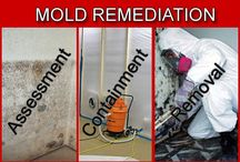 mold removal / by Peyton