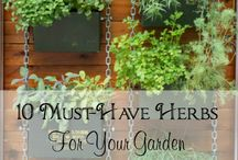 10 must have herbs for your garden