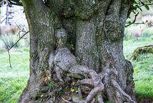 puiden henget