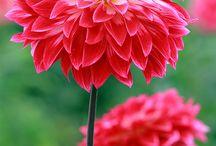 Gardening inspiration!!