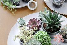 Fabulous Plants / Shop Fabulous at Cavendish Square and online http://www.fabulousflowers.co.za