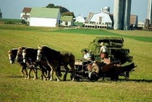Amish Simple Life / by Brent Wilson