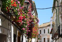 Córdoba, de Spaanse stad bij uitstek! / Als er één stad geschikt is om een boeiende en leuke tuinreis te maken dan is het wel Córdoba! Daarvoor zijn in deze stad immers alle ingrediënten aanwezig: een eeuwenoude binnenstad, een patiofestival met meer dan 60 open tuinen in datzelfde centrum, verschillende historische tuinen, paleizen, kerken en moskeeën!