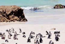 TRAVEL: SOUTH AFRICA & CAPE TOWN