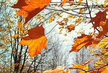 podzimní krása