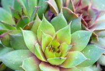 Plants Delights