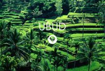 Ubud - Bali - Indonesia - Bedforest / Accommodation in Ubud avaible on http://www.bedforest.com/ubud/  - The calmer side of Bali. Green and laid-back.  A place to contemplate. To write. To relax. To connect with nature and whatnot.  No. There's no beach in Ubud. But what it lacks in the tanning department, you'll get plenty on the spiritual side. Ubud is full of meditation gurus and yoga practitioners.