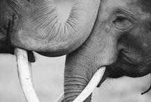elephants / by Christine Florido