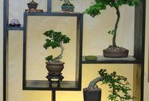 Bonsai ağaçlar