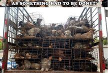 Hjelp dyr!!