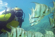 Scuba Diving Fort Lauderdale / Diving in Hollywood Beach. Specifically off Johnson Street there is a secret diving spot, only a few natives like me can find. Will post pictures of what its like.