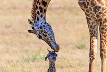 A mothers love......