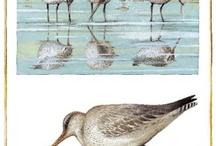 Птицы (творчество)