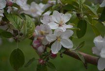 Oneida Nation Apple Orchard / Amazing images of the Oneida Nation Apple Orchard.