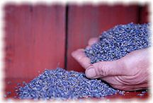 Lavender / by Robyn Murphey-Hjort