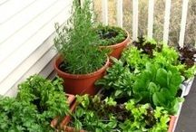 Balcony Vegetable Garden / by Domestic Curator