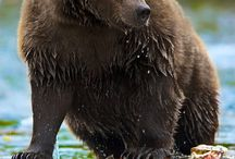 Bjørnen min <3