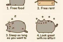 Cats / Koty szeroko pojęte