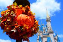 Halloween at Walt Disney World / Photos and Video of Halloween at Walt Disney World!