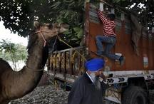Indian Rural Olympics